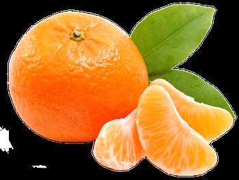 Mandarins Marcott Sadat Agro -Citrus 3