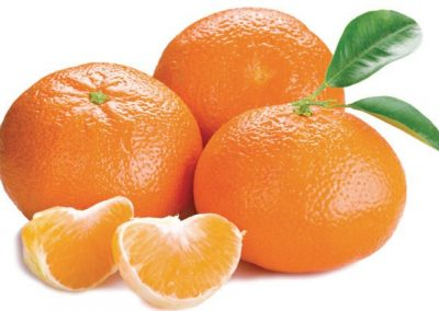 Mandarins Marcott Sadat Agro -Citrus 4