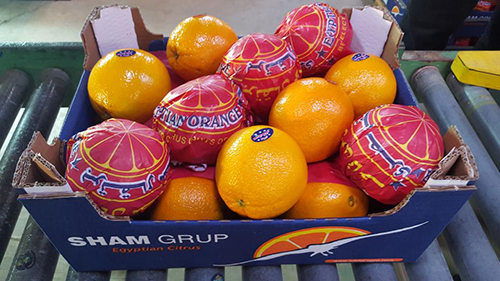 Navel Oranges 3-Sadat agro - Sadat global