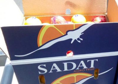 Navel Oranges 4 -Sadat agro - Sadat global