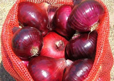 Onions 1 -Sadat agro - Sadat global