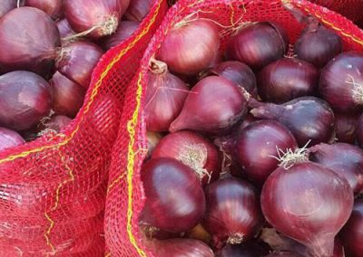 Onions 2 -Sadat agro - Sadat global