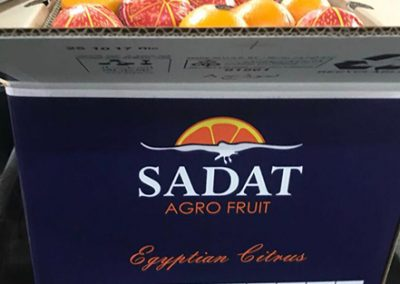 Valencia Oranges 1-Sadat agro - Sadat global