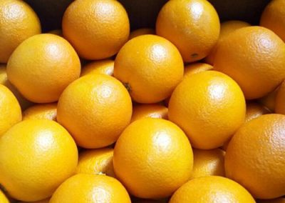 Valencia Oranges 5 -Sadat agro - Sadat global