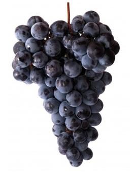 Sadat Agro - Autumn Royal Grapes 5