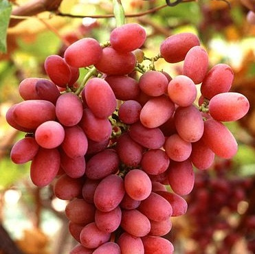 Sadat Agro - Crimson Grapes 2