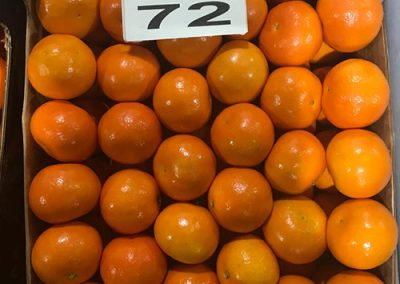 Mandarin Marcutt 2-Sadat agro - Sadat global