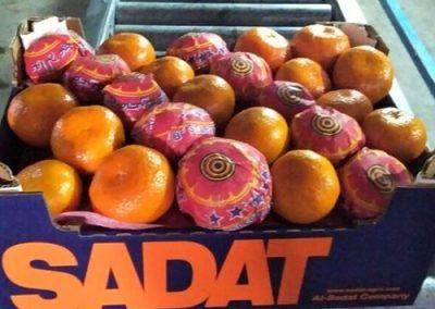 Mandarin Marcutt 3 -Sadat agro - Sadat global