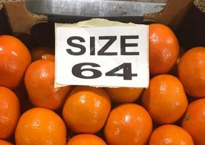 Mandarin Marcutt 4-Sadat agro - Sadat global