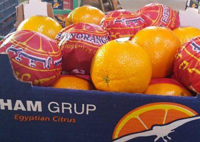 Navel Oranges 2 -Sadat agro - Sadat global