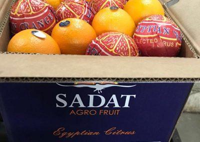 Navel Oranges 5-Sadat agro - Sadat global