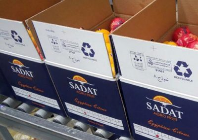 Valencia Oranges 3 -Sadat agro - Sadat global