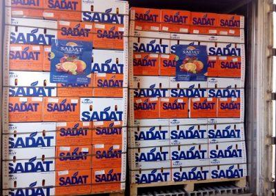 - 10 Egyptian Valencia Citrus Oranges Sadat agro - Sadat global