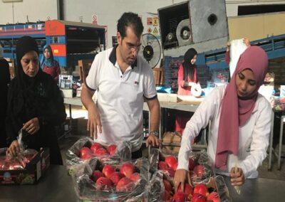 10 1 Egyptian Pomegranates Sadat agro - Sadat global