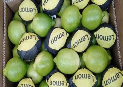 10 Egyptian Lemons Sadat agro - Sadat global