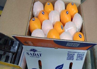 13 Egyptian Oranges Sadat agro - Sadat global