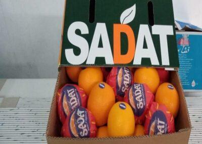 14 Egyptian Oranges Sadat agro - Sadat global