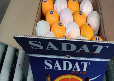 16 Egyptian Oranges Sadat agro - Sadat global