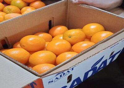 17 Egyptian Oranges Sadat agro - Sadat global