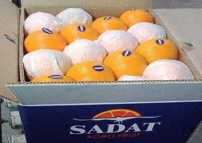 18 Egyptian Oranges Sadat agro - Sadat global