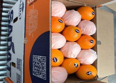 2 Egyptian Oranges Sadat agro - Sadat global