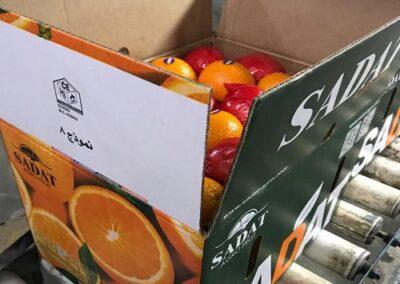 300 Egyptian Oranges Sadat agro - Sadat global