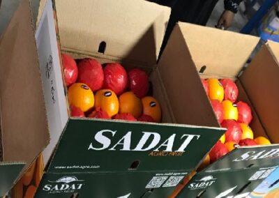 30Egyptian Oranges Sadat agro - Sadat global
