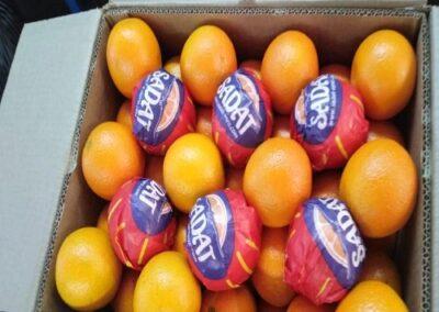 31 Egyptian Oranges Sadat agro - Sadat global