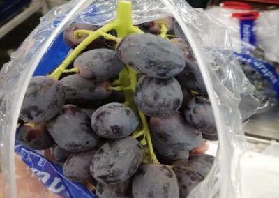5 Egyptian Grapes Sadat agro - Sadat global