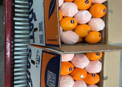5 Egyptian Oranges Sadat agro - Sadat global