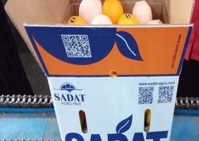 8 Egyptian Oranges Sadat agro - Sadat global